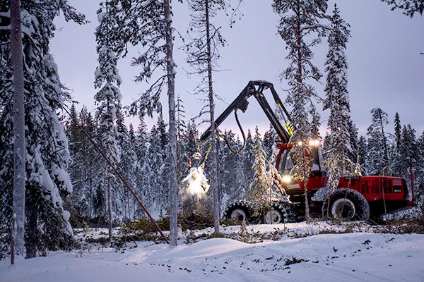 Komatsu Forest -valokuvauskilpailu marraskuu sija 2 Seija Olkkonen